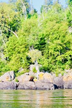 Spirit Little Cedar Tree a.k.a. Witch Tree