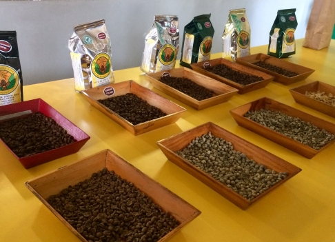 Different Kinds of Coffee Produced at Doka Estate