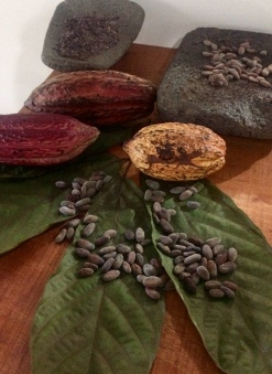 Cocoa Fruit and Nibs