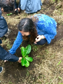 Planting Our Tree
